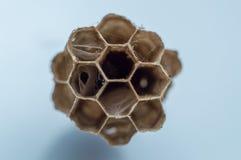 Furo do ninho da vespa no fundo branco foto de stock royalty free
