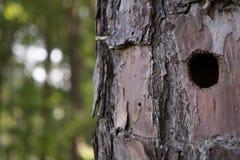 Furo do pica-pau em uma árvore Fotografia de Stock Royalty Free