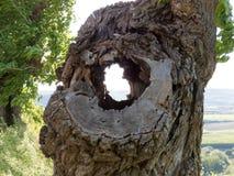 Furo velho na árvore Imagens de Stock