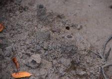 Furos de respiração do caranguejo da lama na floresta dos manguezais imagens de stock
