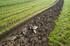 Furrow Stock Photos