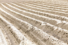 Furrow on the field Stock Image