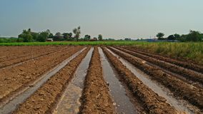 Furrow irrigation in crops production Royalty Free Stock Photography
