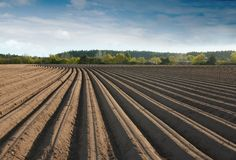 Free Furrows Stock Photos - 2633273