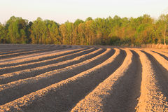 Furrows Stock Photo