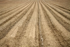 Furrows Royalty Free Stock Photography