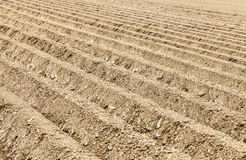 Furrows Abstract Stock Image