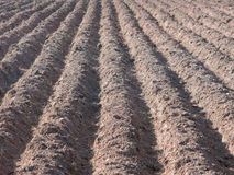 Furrows in dry, reddish soil. Stock Photo