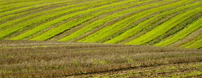 Furrows in a field agriculture soil Royalty Free Stock Photo