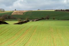 Furrows in a field agriculture soil Royalty Free Stock Images