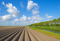 Furrows in a field Stock Image