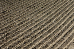 Furrows in the field Stock Image