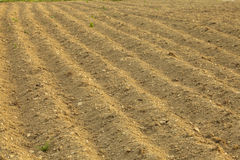 Furrows on the field Royalty Free Stock Photos