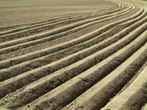 Potato field furrows Royalty Free Stock Images
