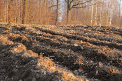 Furrows on the field Stock Image