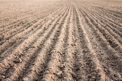 Furrows In A Field After Plowing It Stock Photo