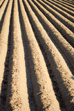 Furrows Royalty Free Stock Image