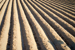 Furrows Stock Photography