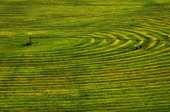 Furrows of Green Healthy Crops  in Field Stock Photos