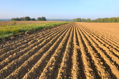 Furrows in land Stock Photos