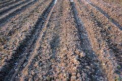 Badly plowed arable land. Furrows of plowed agricultural land, covered with a small dry crust before planting cereals Royalty Free Stock Photo