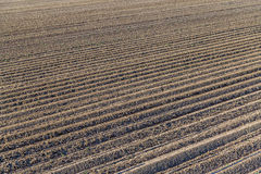 Furrows of a plowed field Stock Photos