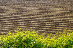 Furrows of a plowed field Stock Photo