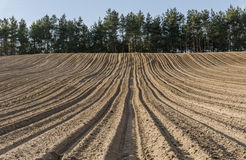 Furrows in plowed field in hilly terrain in spring Royalty Free Stock Photos