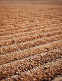 Furrows of a Plowed Field Stock Image