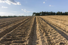 Furrows in plowed field in spring Stock Image