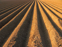Furrows ready for sowing. Cultivated field stock image
