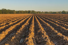 Furrows in Red Earth Royalty Free Stock Photos