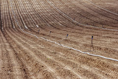 Furrows. Regular furrows of land with long pipes for irrigation royalty free stock photography