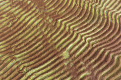 Furrows and ripples on wet sand texture Stock Photo