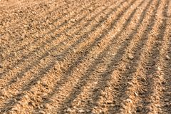 Furrows row pattern in a plowed field. Background or texture with selective focus. Royalty Free Stock Photo