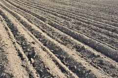 Furrows row pattern in a plowed field prepared for planting crops in spring. Horizontal view in perspective royalty free stock photos