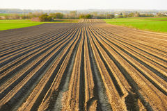 Furrows row pattern in a plowed field prepared for planting. Royalty Free Stock Image