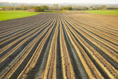 Furrows row pattern in a plowed field prepared for planting. stock images