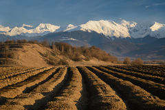 Furrows Row Pattern with Snowy Mountains in Background. Plowed land with furrows row pattern prepared for potatoes crop in spring day. Perspective view with royalty free stock photo
