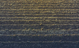Furrows rows pattern Stock Photography