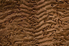 Furry brown background Stock Images