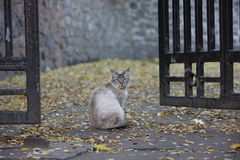 Furry cat at a gate in Kiev Stock Images