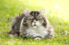 Furry cat is resting in green grass Stock Photography