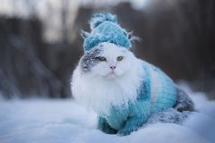Furry cat walks through snowdrifts in winter stock photos