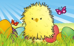 Furry chicken. Among easter eggs Royalty Free Stock Image