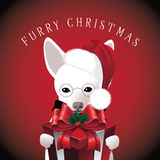 Furry Christmas dog with gift Royalty Free Stock Photography
