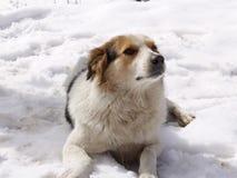 Furry cute dog sitting stock photo