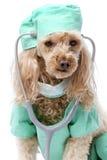 Furry Doctor On Call Stock Photos