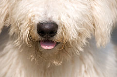 Furry dog Stock Photography