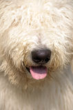 Furry dog. Close-up of a furry dog's head (eyes can not be seen by the fur Royalty Free Stock Images